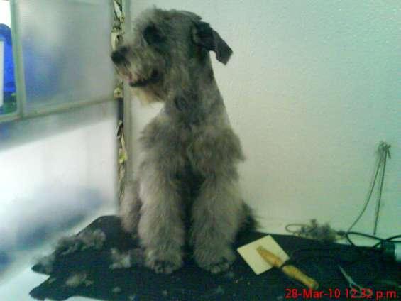 Peluqueria perros a $20000