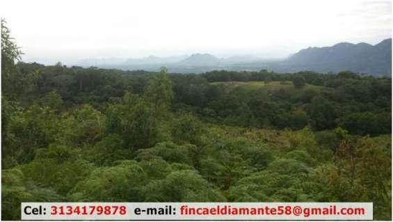 Gangazo finca ganadera y agricola de 161 hectareas con 2 casas en mariquita tolima