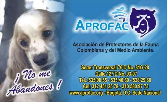 Fotos de Cursos peluqueria canina  con certificacion  $600.000 1