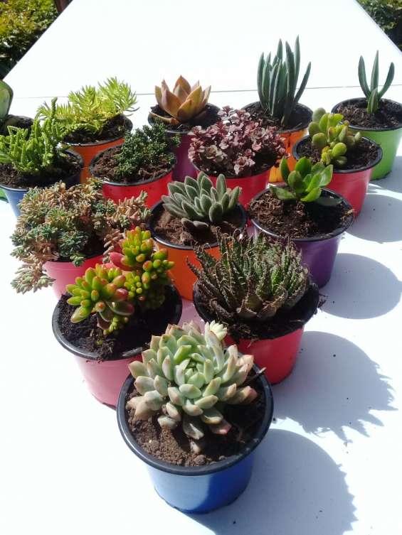 Suculentas plantas colombia