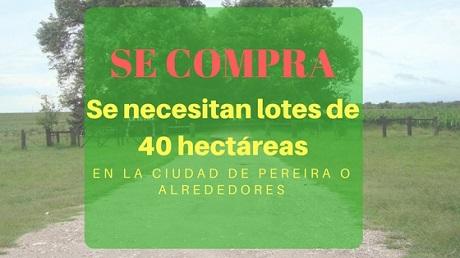 Se necesitan lotes de 40 hectáreas en pereira