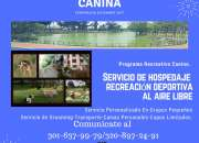 Guardería Canina Bogota