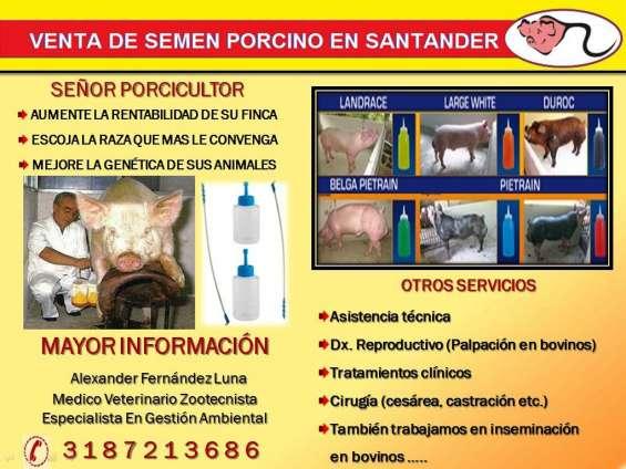 Inseminación en cerdos o también venta de dosis de semen porcino
